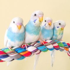 Pet bird stuff... Kevin's Birds on Instagram