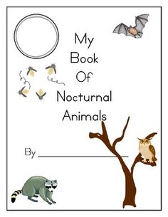 A Place Called Kindergarten: nocturnal animals or day and night ...