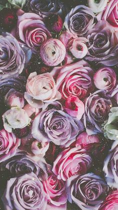 Wallpaper iPhone/beautiful/roses ⚪