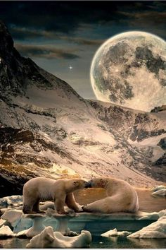 Polar bears North Pole with moon