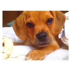 Adorable baby puppy