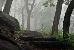 Trees/ Steps through the forest by Philipp Engelberth on 500px