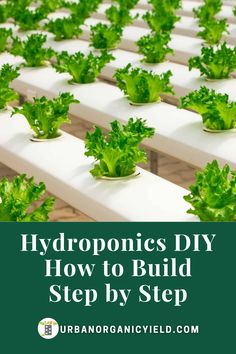 Learn more on my tips, guides and reviews on everything that you can use to begin building your own DIY hydroponics garden yourself #DIY #Hydroponics #Gardening #UrbanOrganicYield Indoor Hydroponic Gardening, Hydroponic Vegetables, Hydroponic Farming, Hydroponic Growing, Hydroponics System, Planting Vegetables, Growing Plants, Gardening For Beginners, Gardening Tips