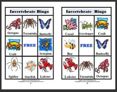 This game for 2-6 players includes 6 Bingo Cards, 16 different Invertebrate Animal Caller Cards, Smiley Face Markers, and 2 Certificates of Achieve...