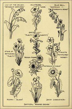 RF. Ashlin  dictionary drawings flowers
