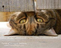 Urban cat Wildlife Photography/ OPEN EDITION by TwistOfUnique