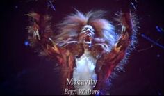 Macavity. Long hair. Very furry. Lots of black and red and orange.