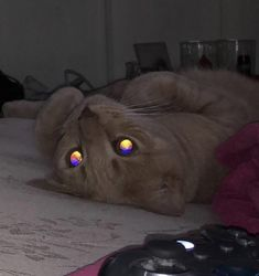 The reflection in my cats eyes from the flash is like a sunset I Love Cats, Cute Cats, Gato Gif, Cat Memes, Spirit Animal, Beautiful Creatures, Indie, Dog Cat, Cute Animals