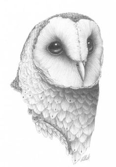Barn Owl by Corinne (http://www.thepaintedparrot.com.au/)