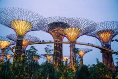 gardens by the bay singapore - Garden By The Bay Bar