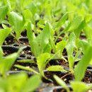 Bacterias promotoras del crecimiento y micorrizas en agricultura ecológica