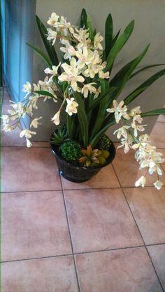 Hermoso arreglo de orquídeas