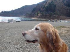 Lucy at Kawaguchiko