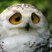 I love owls! This one does truly look confused.