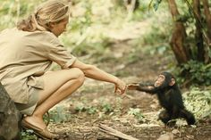 1964   TANZANIA - A touching moment between primatologist and National Geographic grantee Jane Goodall and young chimpanzee Flint at Tanzania's Gombe Stream Reserve. (Photo by Hugo van Lawick)