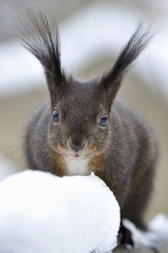 Squirrel antennae?
