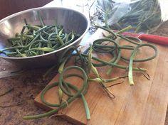 Dame Nature, Green Beans, Vegetables, Plants, Blog, Vegetable Recipes, Flora, Blogging, Plant