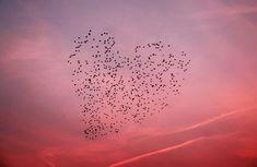 The Birds of Love | ramosnuno