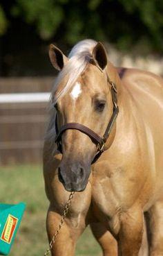A Twist With Honey. Quarter Horse.