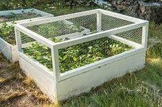 Bildresultat för jordgubbar i pallkrage?