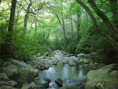 Along the Chimney Tops Trail in Great Smoky Mountains National Park