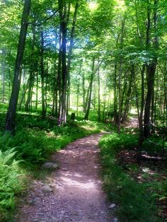 Hike along the Appalachian Trail right here in the Poconos! #PoconoMtns