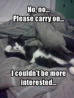 You can carry on; the cat seems uninterested   #funnycat #catmemes #funnymemes