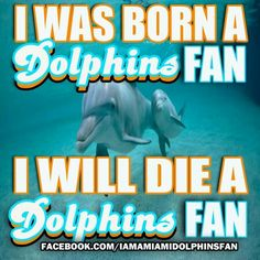 Live and die as a miami dolphins fan