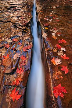 The Crack. Zion National Park by Ian Plant