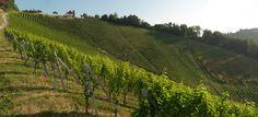 """Die Einzellage """"Hochsulz"""" des Weinguts SKOFF ORIGINAL Vineyard, The Originals, Outdoor, Wine, Outdoors, Vine Yard, Vineyard Vines, Outdoor Games, The Great Outdoors"""