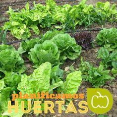 #jardín comestible, #huertos http://espaciosvivos.es/ideas-jardin-comestible/