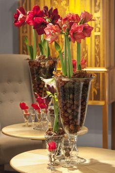Skicka julgrupp? Amaryllis är en julblomma som går hem hos alla! : Skicka Blommor med Blomsterbud + Blomsterkurs = Blomsterpassion.se