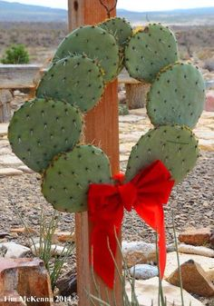 Texas Christmas wreath I have this cactus and have suffered even though wearing gloves, using tongs and newspapers to handle it. Western Christmas, Country Christmas, All Things Christmas, Holiday Fun, Christmas Wreaths, Christmas Crafts, Merry Christmas, Holiday Decor, Christmas In Texas