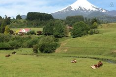 """Check out this awesome listing on Airbnb: """" Puerto Varas, Patagonia, Chile"""" - Apartments for Rent in Puerto Varas Patagonia, Chile, Apartments, Entrance, Travelling, World, Awesome, Nature, Lakes"""