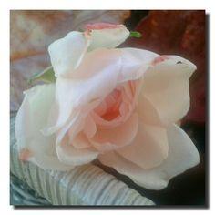 un giardino in diretta: Vita in rosa #giardinoindiretta
