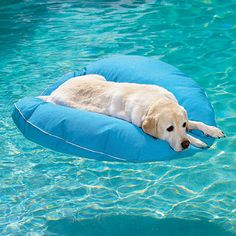 Love this Dog Pool Float and Lounger!