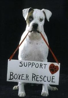 Support Boxer Rescue!! It is one of the greatest joys you will ever experience