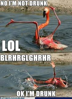 Drunk Flamingo. At the end of my pink flamingo parties