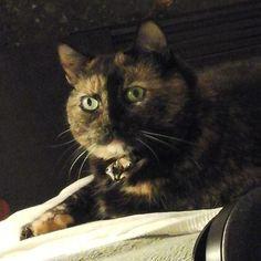 My cutie pir.  #cats #catsofinstagram #catlovers #lovecats