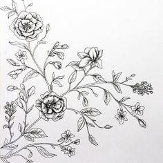 Botanical Illustration by Nicnillas ink