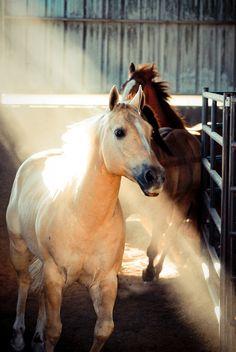 .bellisimos ejemplares                                                       …