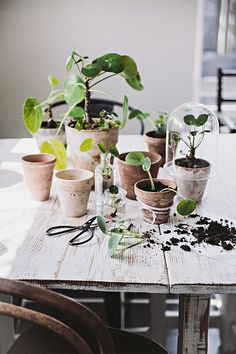 Table covered in beautiful house plants, succulents, and potted plants. Crassula, Spring Aesthetic, Cactus Planta, Plants Are Friends, Plantation, Green Life, Green Plants, Indoor Plants, Potted Plants