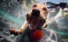 Epic dogs, balls, pool, and camera equation