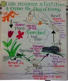 science anchor chart math anchor chart also love the explanation for ...