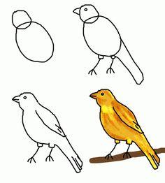 how to draw canary bird