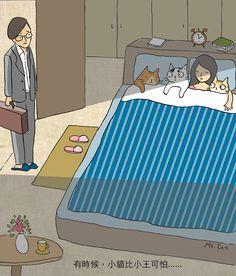 casa gatos