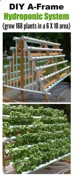 Aquaponics System - Aquaponics System - DIY Vertical A-Frame Hydroponic System, How To Grow 168 Plants In A 6 X 10 Area | Handy Homemade Break-Through Organic Gardening Secret Grows You Up To 10 Times The Plants, In Half The Time, With Healthier Plants, While the Fish Do All the Work... And Yet... Your Plants Grow Abundantly, Taste Amazing, and Are Extremely Healthy #hydroponicgardenhowto Break-Through Organic Gardening Secret Grows You Up To 10 Times The Plants, In Half The Time, With...
