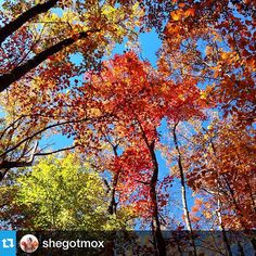 #ParisMountain State Park #fall #leaves