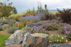Beautiful Xeriscape Landscaping Colorado & 60 Great Ideas for Your Garden - Page 8 of 63 Colorado Landscaping, Landscaping With Boulders, Succulent Landscaping, Home Landscaping, Front Yard Landscaping, Landscaping Software, Landscape Design, Garden Design, Boulder Landscape