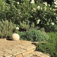White roses, lavender and catmint... #PatinaFarm #Ojai #gardens